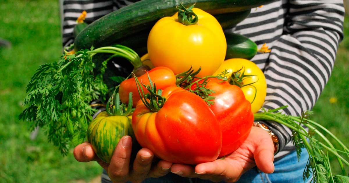 Responsable Comercial Agroalimentario Alemania